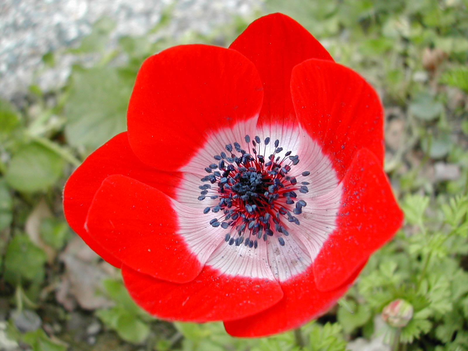 Sfondi gratis desktop fiori sfondi fiori for Sfondi desktop fiori